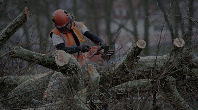 Sheboygan Falls Tree Service