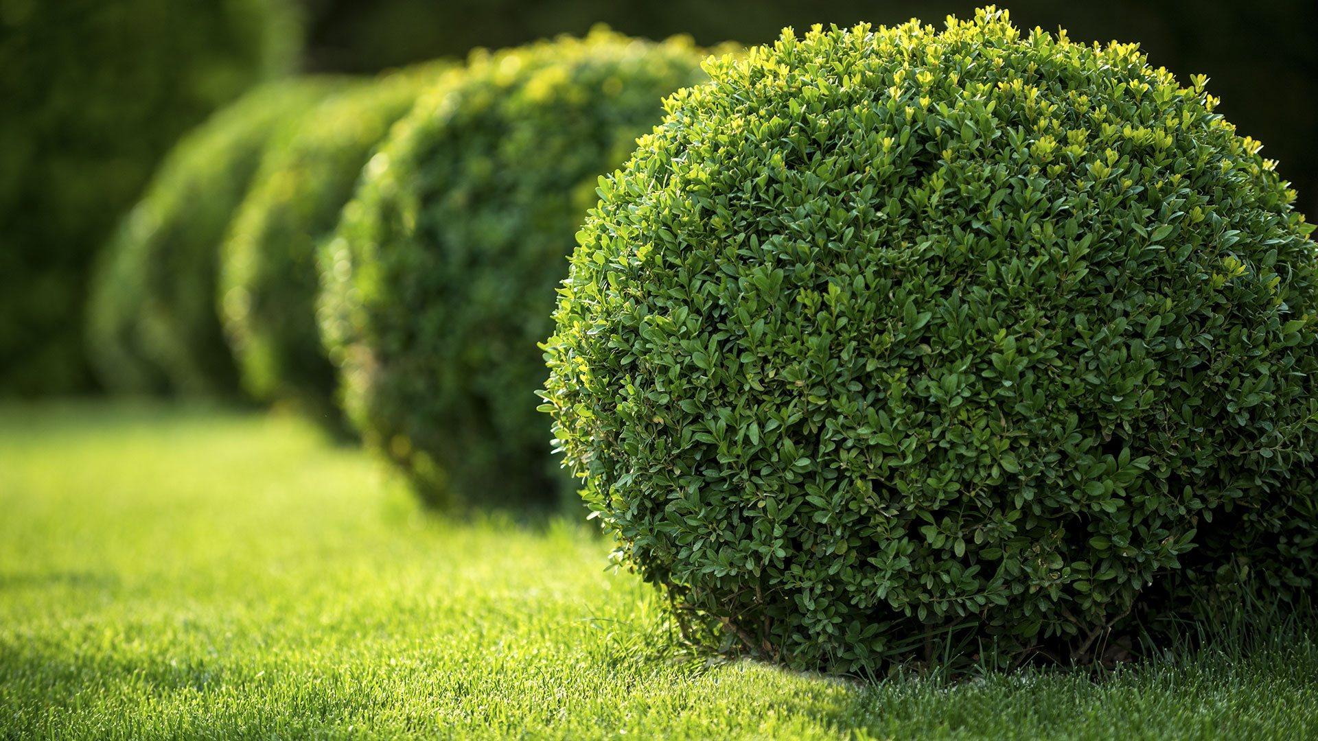 Schultz Landscape LLC Landscaping Company, Landscaping Services and Landscaper slide 1